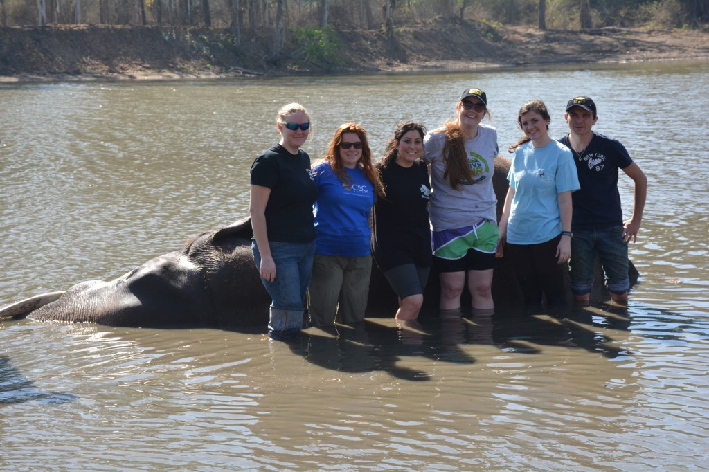 Scrubbed elephant and students