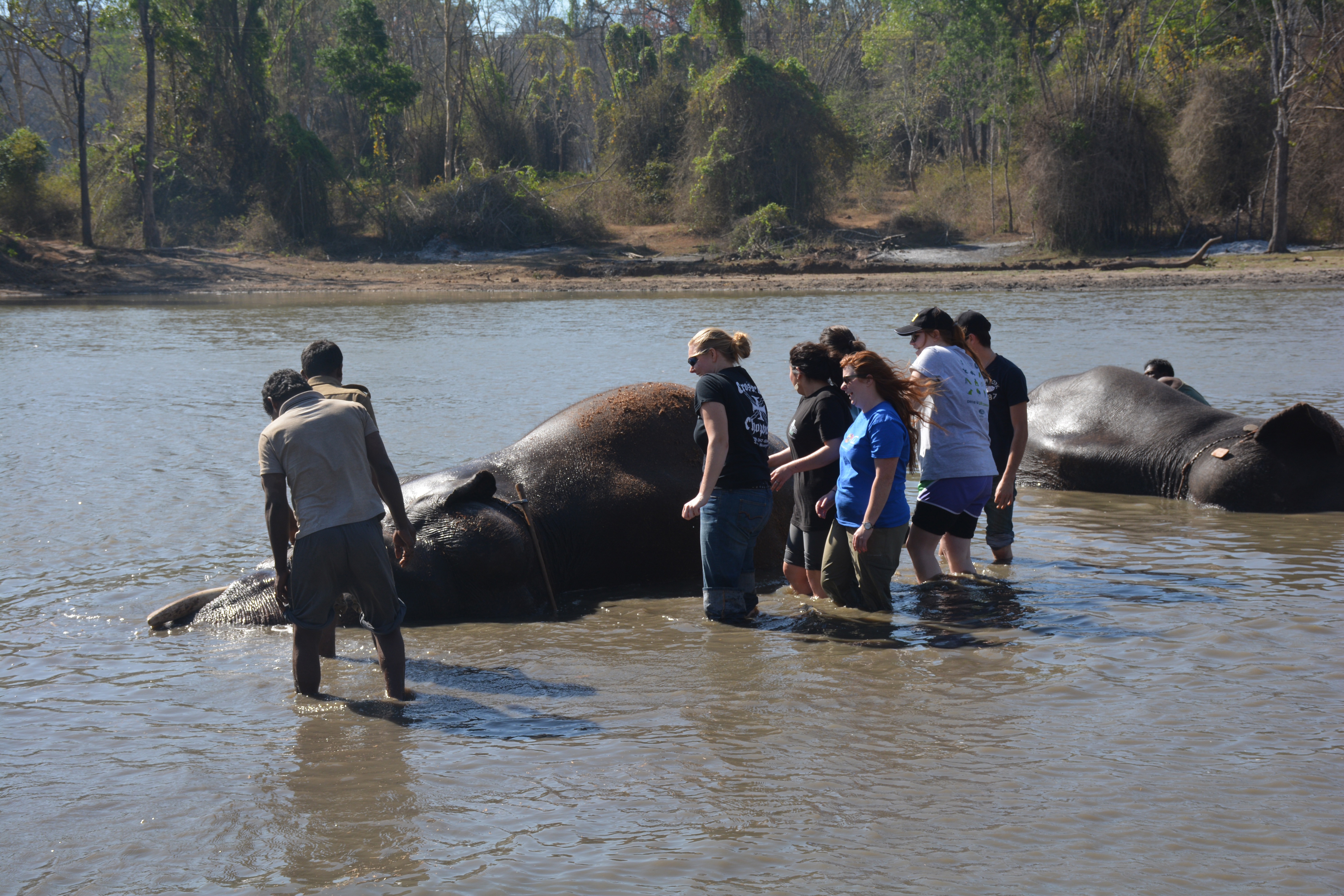 Students Scrubbing Elephants