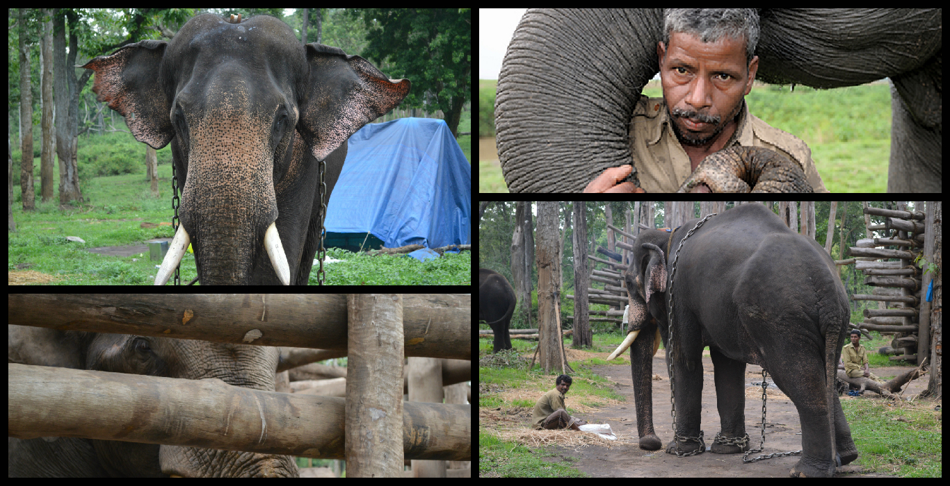 Resolving India's human-elephant conflict